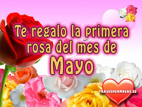 te regalo-la primera-rosa-de -mayo