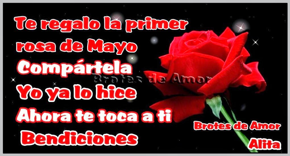 te regalo la primera rosa de mayo