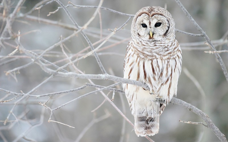 white-owl-on-a-branch-images-162619