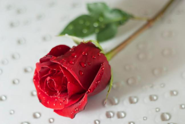 rosas con agua