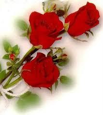 Lindas imágenes de rosas