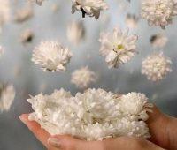Gif de rosas blancas para novia