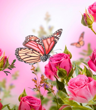 Rose-Butterfly-tall-l