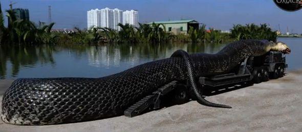 capturan-a-la-serpiente-mas-grande-del-mundo-en-egipto1