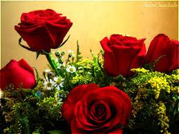 Imágenes de rosas lindas