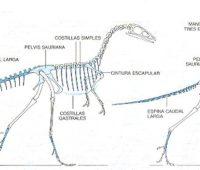 Imágenes de el esqueleto de un dinosaurio