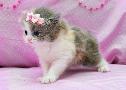 gatita con moño rosa