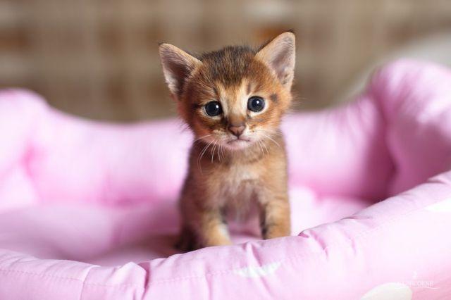 gatitos-recién-nacidos-lindos