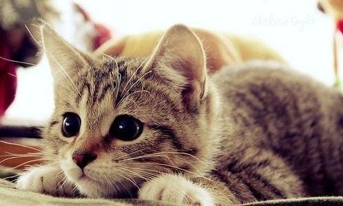 gatitos-tiernos