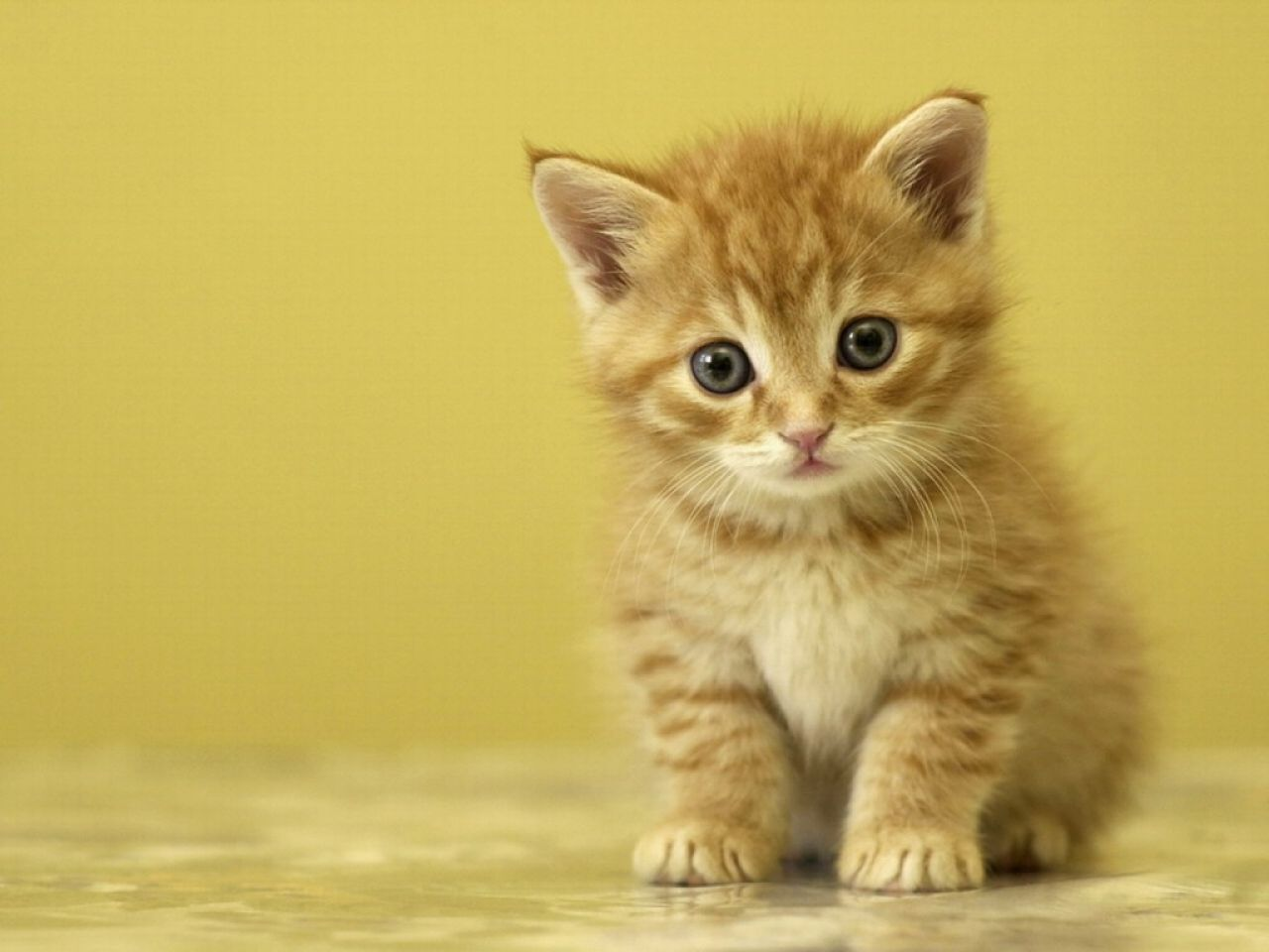 gatos-