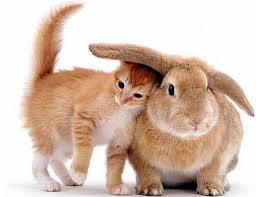 gatos muy tiernos