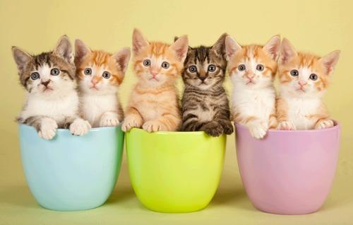 gatos-tiernos-fotos-bebes