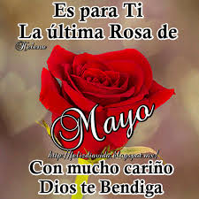 la ultima rosa del mes de mayo para ti