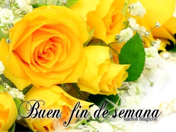 rosas amarillas de domingo