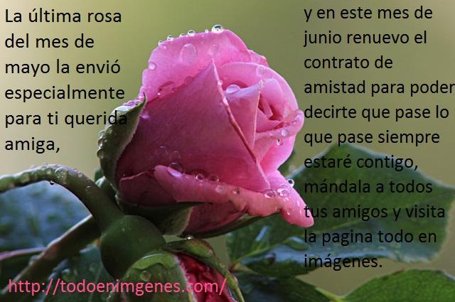 rosas-hermosas-2