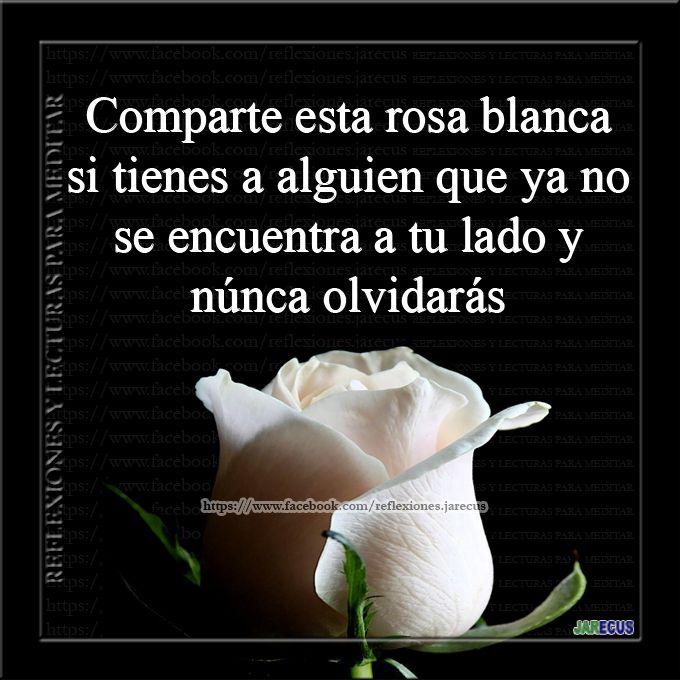 rosas para compartir de luto