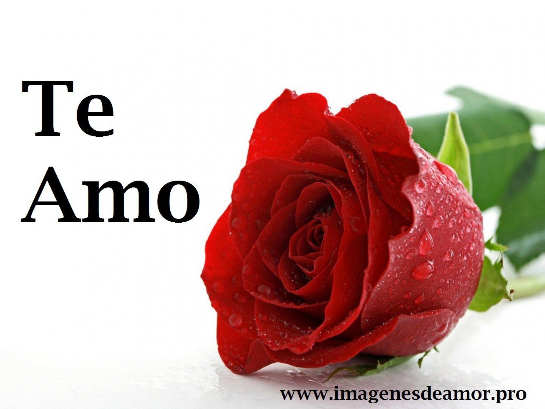 rosio-rosa