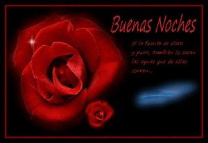 rosas-hermosas-de-buenas-noches-71