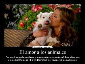 amor a los animales 4
