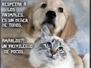 amor para los animales