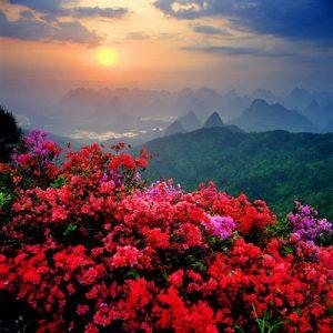 bellos paisajes con flores