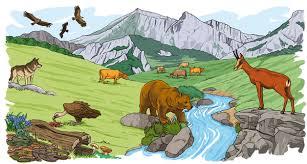 Cuadros sinópticos sobre Ecosistema y mapas conceptuales sobre ...