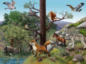 ecosistema 3