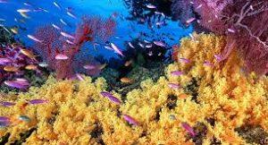 ecosistema acuático 2