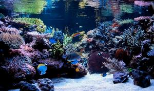ecosistema acuático 4