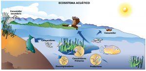 ecosistema acuantico 3