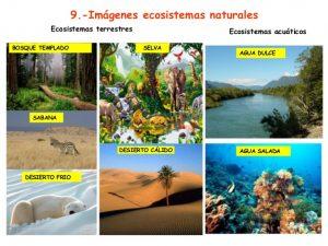 ecosistemas 6