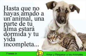 frases-amor-respeto-a-los-animales-1
