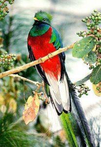 imágenes del quetzal