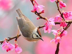 imagenes-de-primavera-1