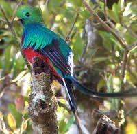 los quetzales bonitos
