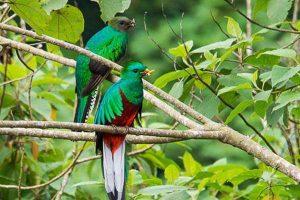 los quetzales más bonitos