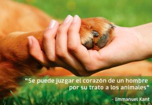 respeto a los animales 2