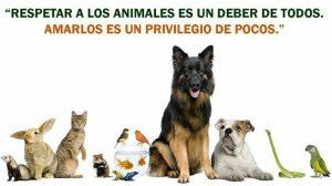 respeto para los animales