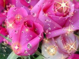 rosas lindas 3