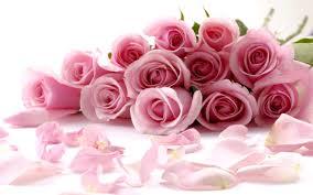 rosas lindas 4