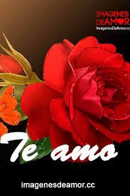 rosas para los enamorados 3
