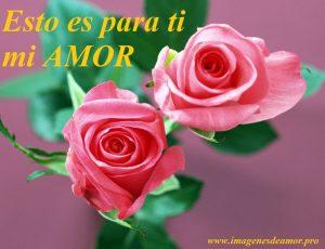 rosas para los enamorados 8