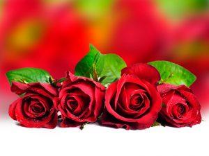rosas para para los enamorados 3
