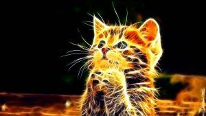 Imágenes - de - gatos - en - 3d - para - fondo de  pantalla 4