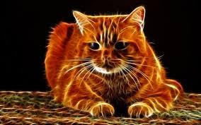 Imágenes - de - gatos - en - 3d - para - fondo de  pantalla 5