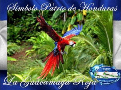 La-Guacamaya-Roja-Simbolo-Patrio-de-Honduras-Cone-copia-1