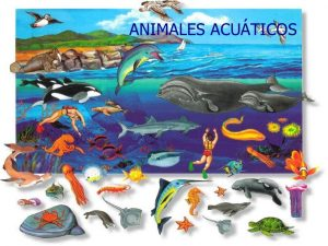 animales - acuáticos 2