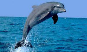 animales-acuaticos