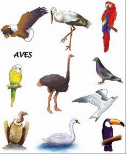 animales-aereos 3