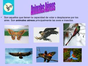 animales-aereos 4